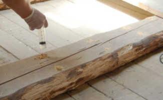 Способы борьбы с короедом